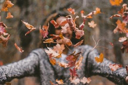 leaves_jakob-owens-172511