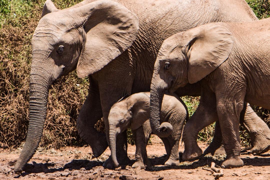 tobin-rogers-elephant